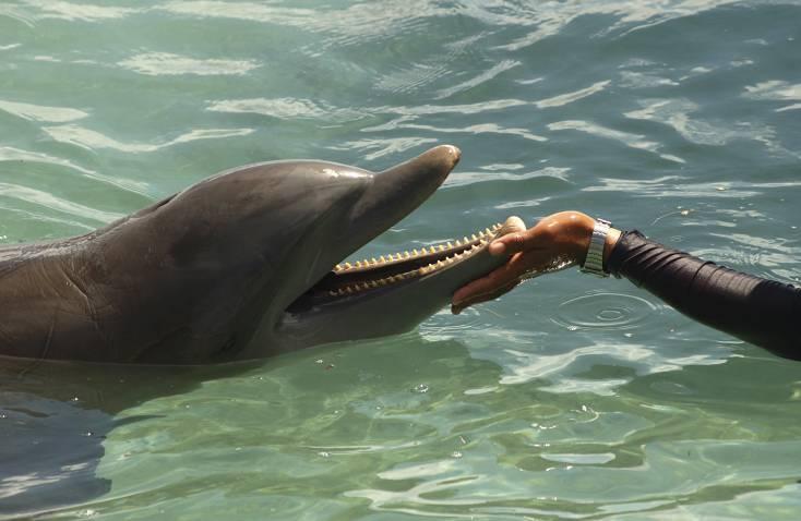 delfino chiede aiuto