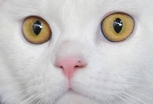 1415216241 300x204 Aeroporto Fiumicino: turista americano tenta di imbarcare 19 gatti