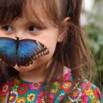 Butterflies Are Released Into The Natural History Museum's Sensational Butterflies Exhibition