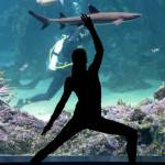 AUSTRALIA-LIFESTYLE-OCEANARIUM-YOGA
