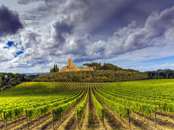 Tuscany countryside covered in vineyards