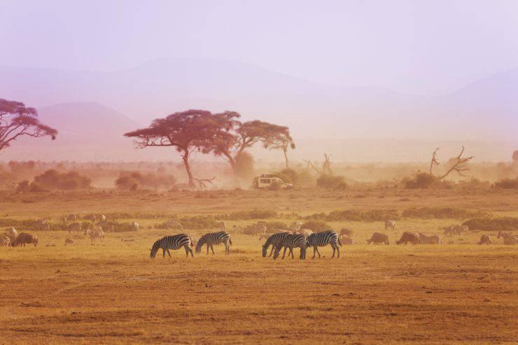 Safari in Kenya (iStock)