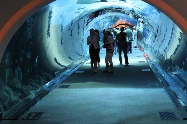 Dubai acquario
