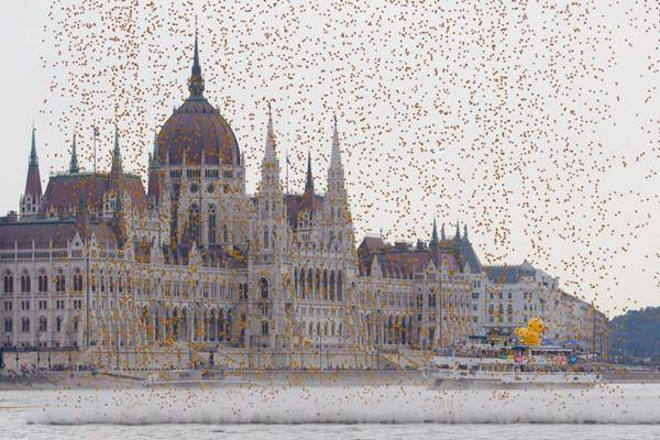 budapest papere di plastica Great Rubber Ducky Race 2014