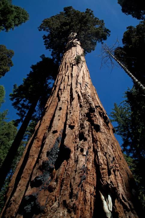 Ecco i 10 alberi pi belli del mondo foto for I mobili piu belli del mondo