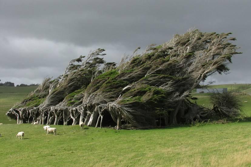 alberi vento