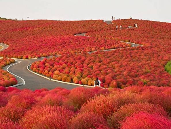 5 Incredibili metamorfosi della natura in autunno
