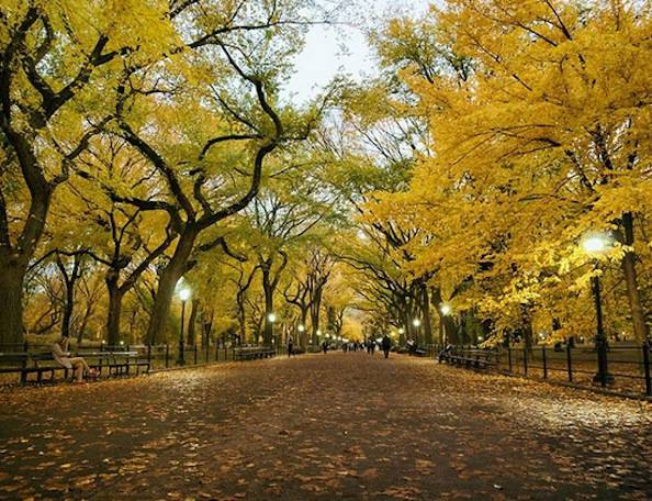new york autunno