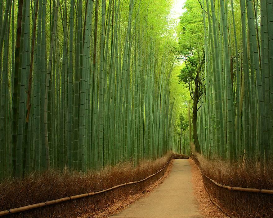 Sentiero del Bamboo a Kyoto, Giappone