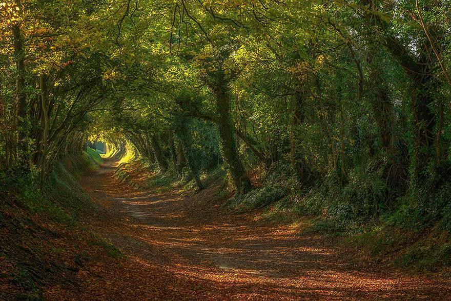 Sentiero per Halnaker Windmill, Sussex