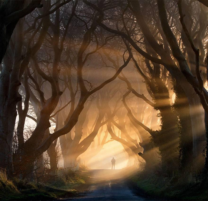 The Dark Hedges in Irlanda del Nord