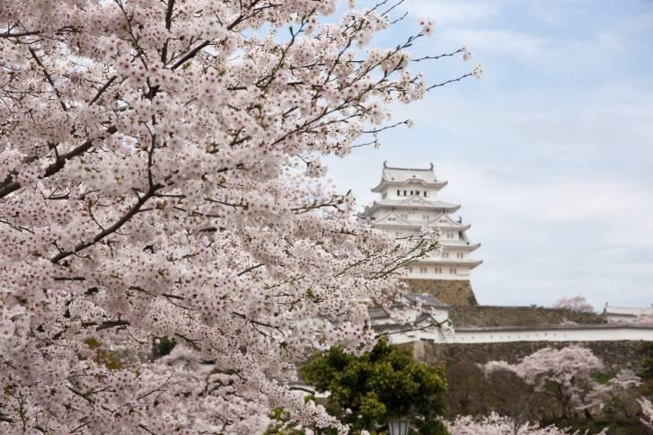 Himeji castle (Think Stock)