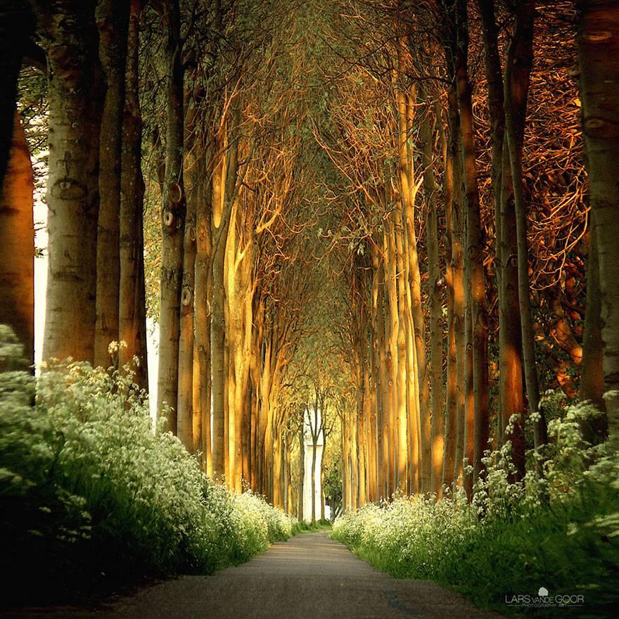 Sentiero di alberi, Olanda