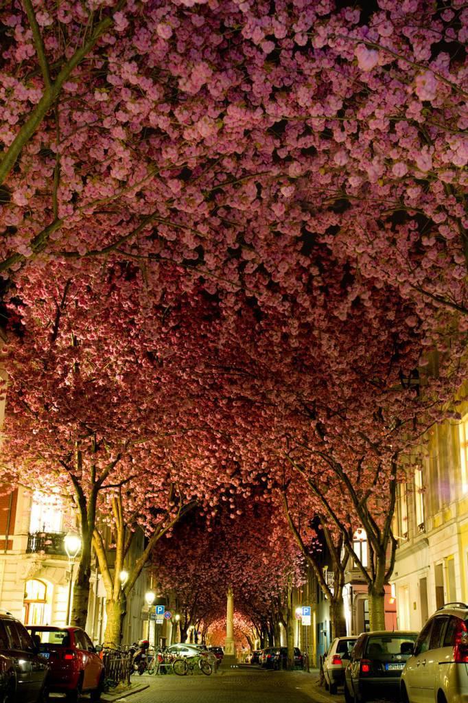 Una strada di Bonn, Germania
