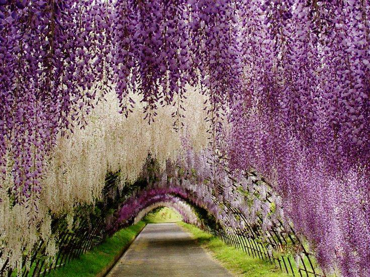 Wisteria Lane Tunnel