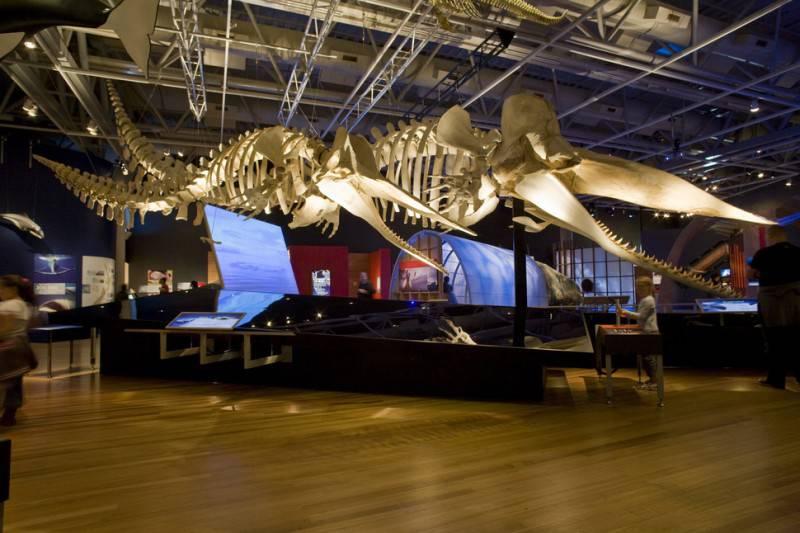 Museum of New Zealand, Te Papa, Wellington