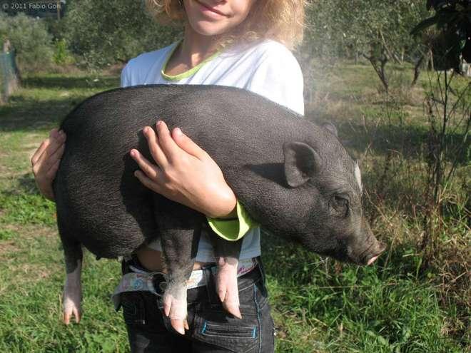 ragazza con maiale nano