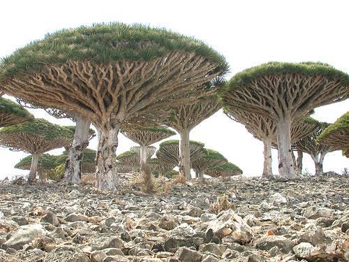 isola di Socotra