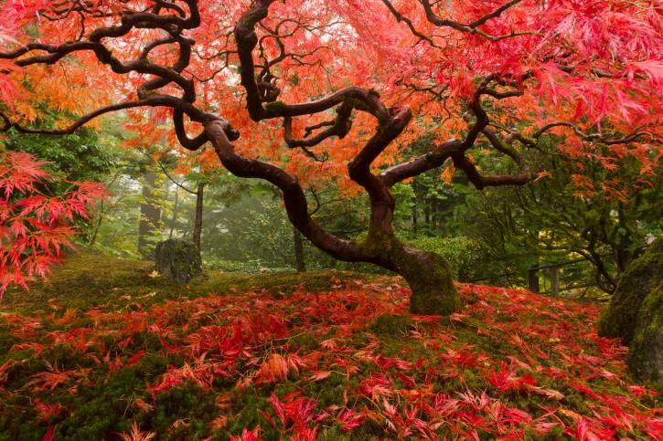 Il giappone vive in un giardino nel cuore di roma - Giardini zen immagini ...