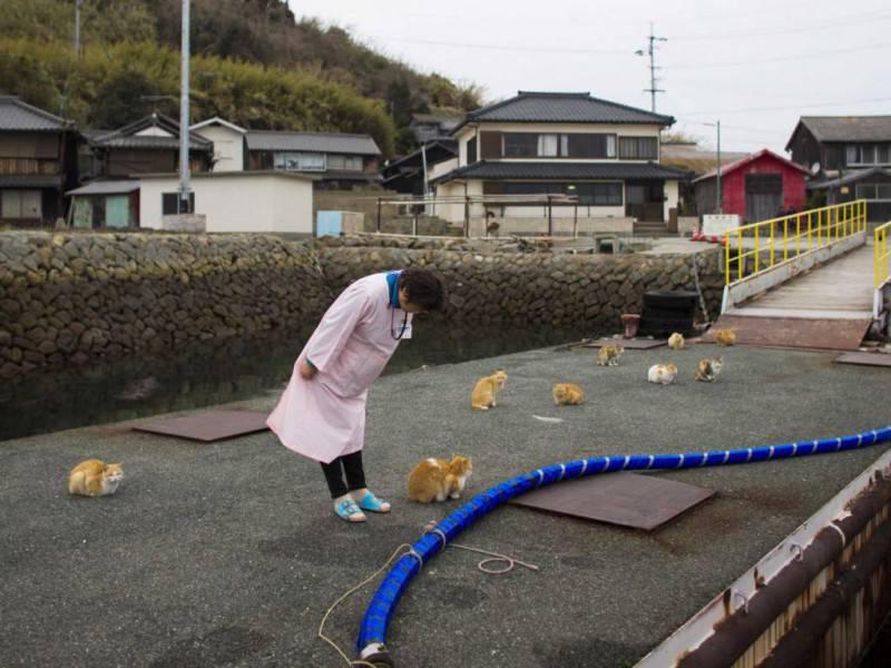 Aoshima isola gatti
