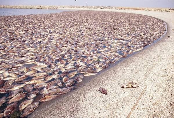 lago di salton (foto dal web)