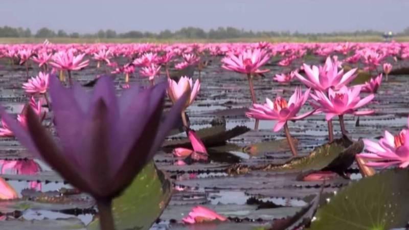Lago Nong Harn