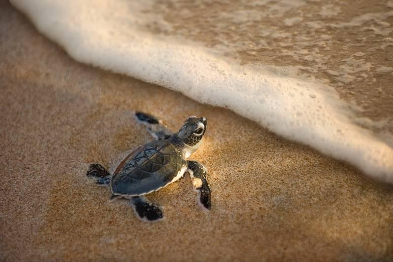 turtle2_shutterstock_91039295 (1)