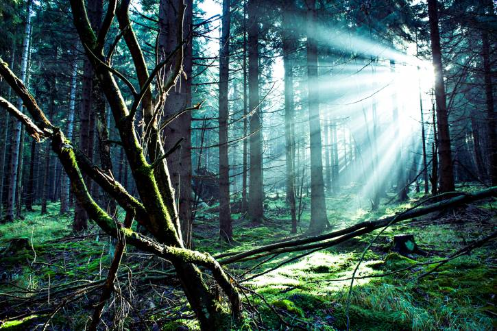 Foresta Nera, Germania (Thinkstock)