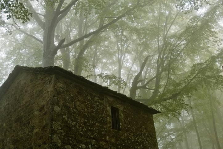 Bosco della Verna (Thinkstock)