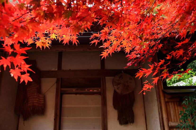 Arashiyama, Kyoto (Foto di Takeshi Kuboki-LIcenza CC BY 2.0 via Wikimedia Commons)