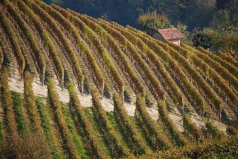 Colline delle Langhe in autunno (Foto di Massimo Telò. Licenza CC BY-SA 4.0 via Wikimedia) Commons