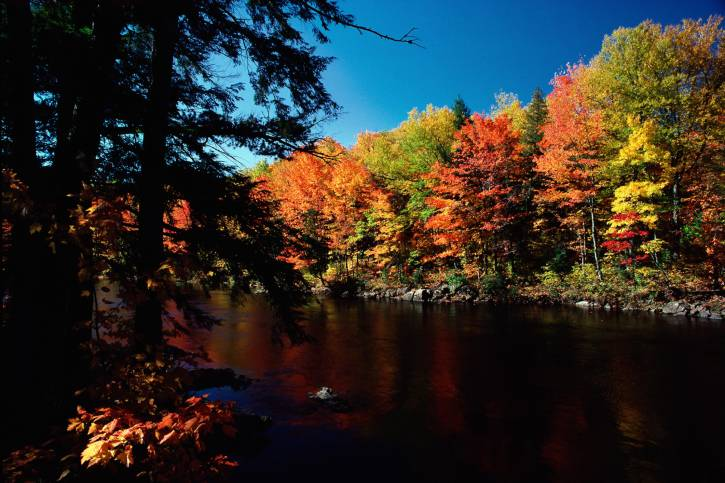 Foresta in autunno (Thinkstock)