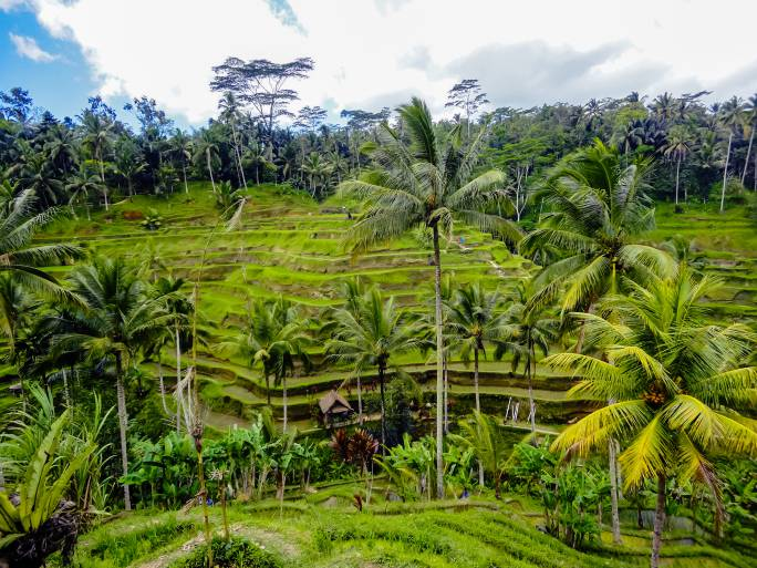 Ubud, Bali (Thinkstock)