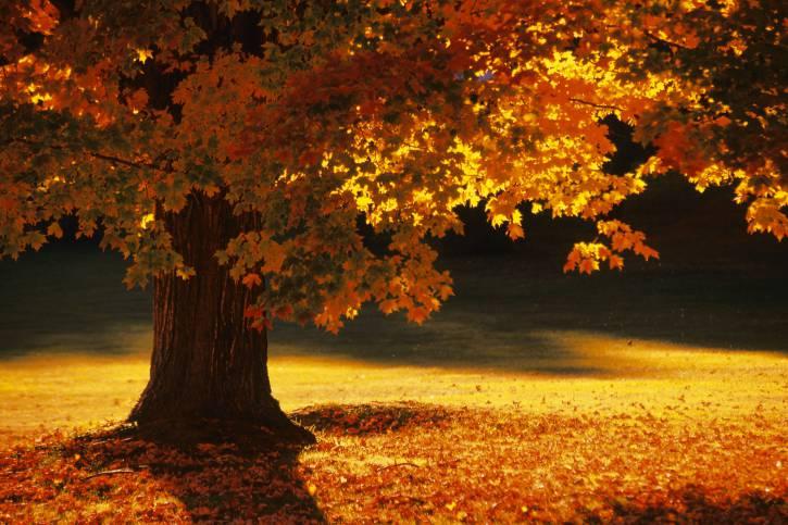 Bennington , Vermont, autunno (Thinkstock)