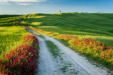 Beautiful view of green fields and meadows at sunset, Tuscany