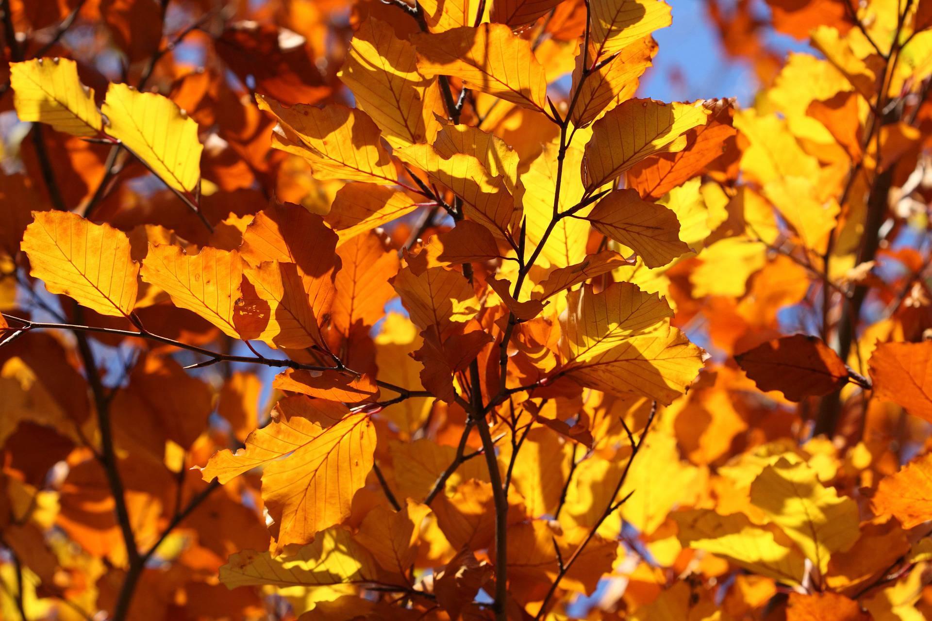Autunno foto di paesaggi spettacolari for Immagini autunno hd