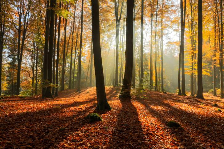 Foresta in Polonia (Thinkstock)