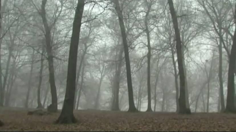 La foresta di Hoia Baciu in Romania (Dal sito hoiabaciuforest.com)