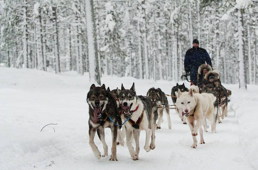 Slitta con i cani, Santa Claus Village, Rovaniemi (JONATHAN NACKSTRAND/AFP/Getty Images)