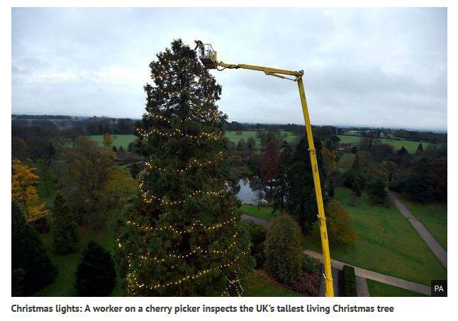 Albero di Natale nel Sussex (Screenshot Mirror)