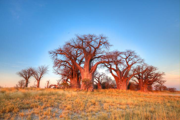 Botswana (ThinkStock by GettyImages)