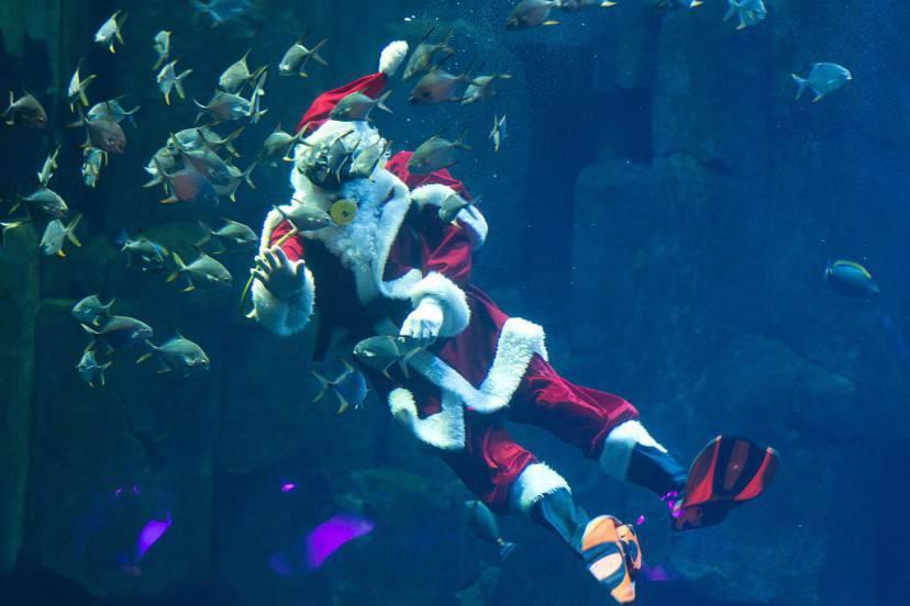 Babbo Natale, acquario di Parigi, Natale 2015 (KENZO TRIBOUILLARD/AFP/Getty Images)