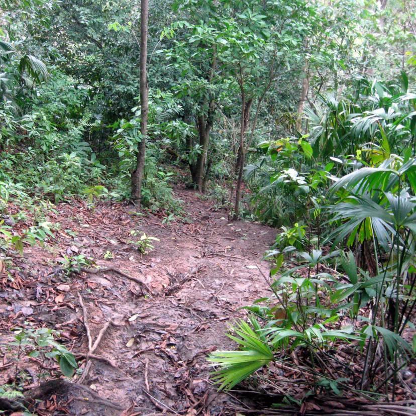 Darién, giungla, Colombia (Wikicommons, pubblico dominio)