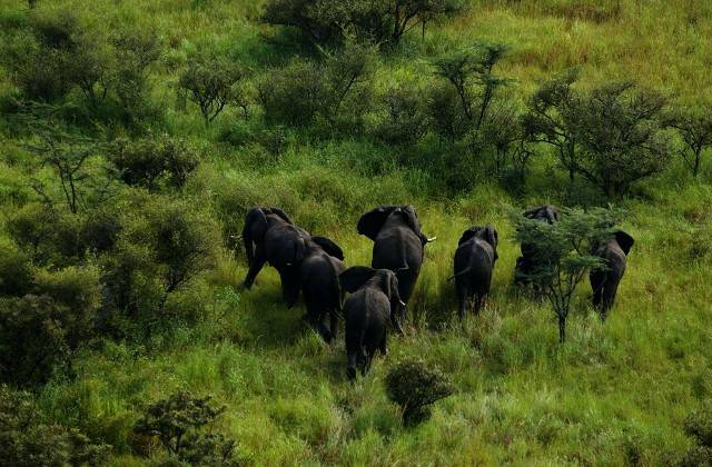 Boma National Park, Sud Sudan (Foto Facebook)