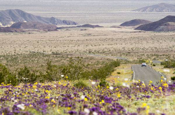 Death Valley (ROBYN BECK/AFP/Getty Images)
