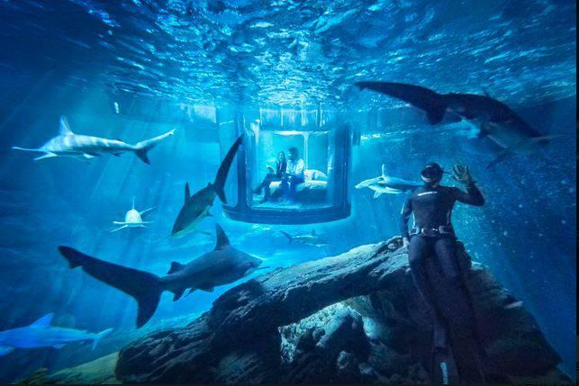La camera nella vasca degli squali all'Acquario di Parigi (Foto Airbnb)