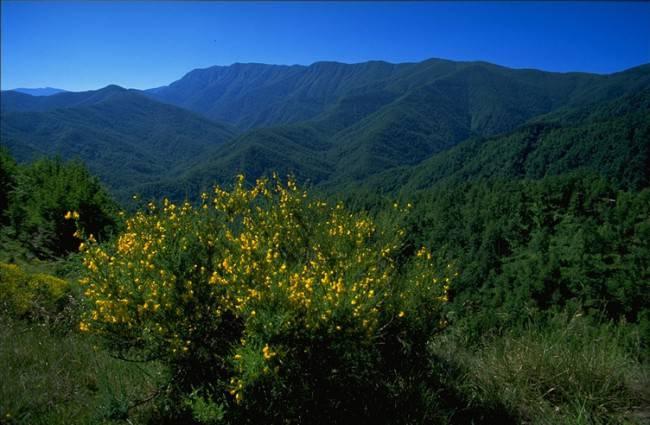 Parco nazionale delle Foreste Casentinesi (Foto Nevio Agostini, CC BY-SA 3.0, Wikipedia)