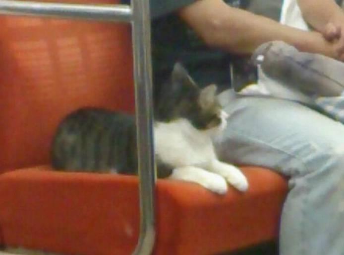 gatto sulla metro 3