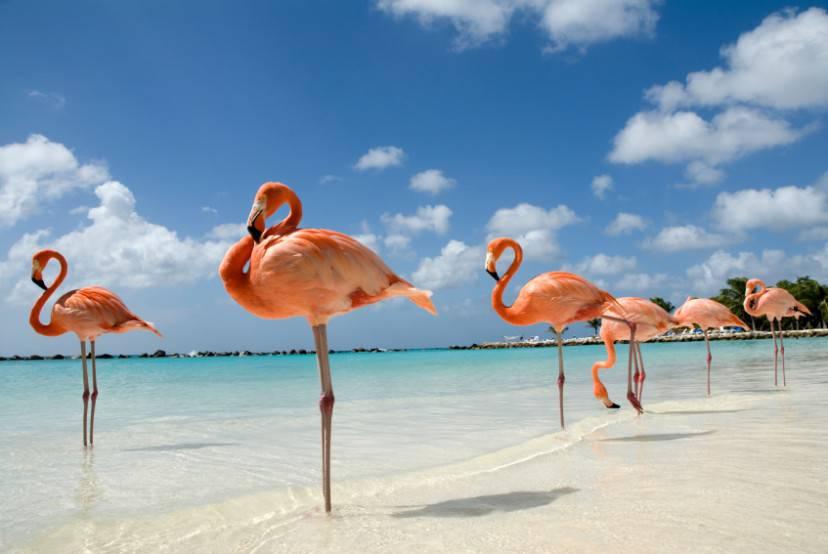 Fenicotteri sulla spiaggia