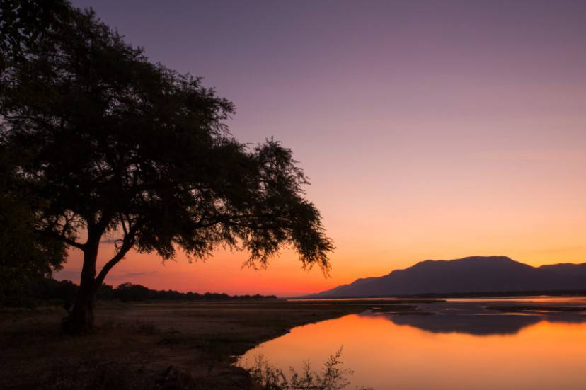 Sunset over the Zambezi river and Ana tree
